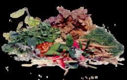 Garden-waste-collection-in-W1-Soho
